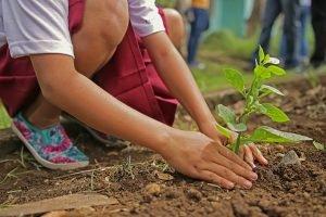 O civilizaţie înfloreşte atunci când oamenii plantează copaci în umbra cărora nu vor sta niciodată.